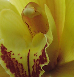 artistic photo based giclee of orchid